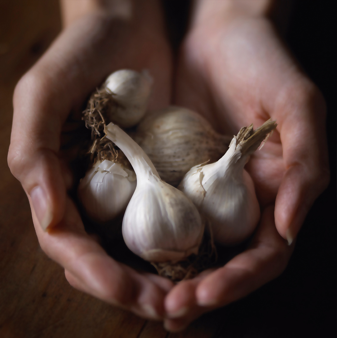 garlic in hands